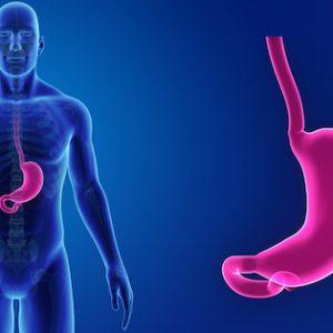 Programa natural para el estreñimiento. Un acercamiento digital del estomago de una persona.